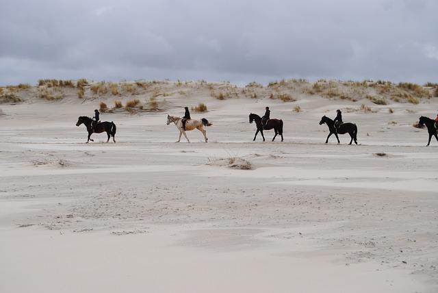 Pferde am Spiekerooger Strand