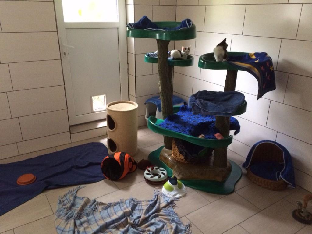 Das Katzenzimmer des Tierheims Aurich