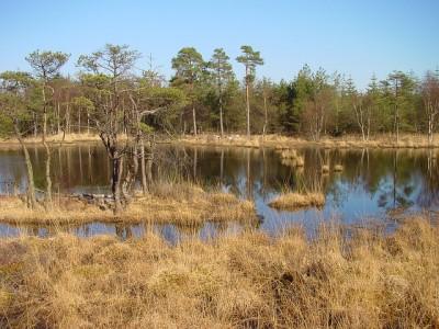 Moor in Ostfriesland