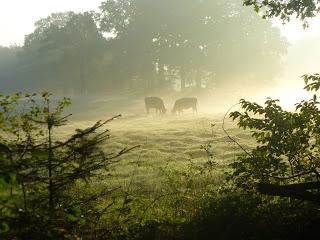 Ostfriesland - Heimat von Ostfriesenkrimi Autorin Susanne Ptak