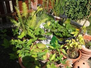 Pflanzen Edna Schuchardt