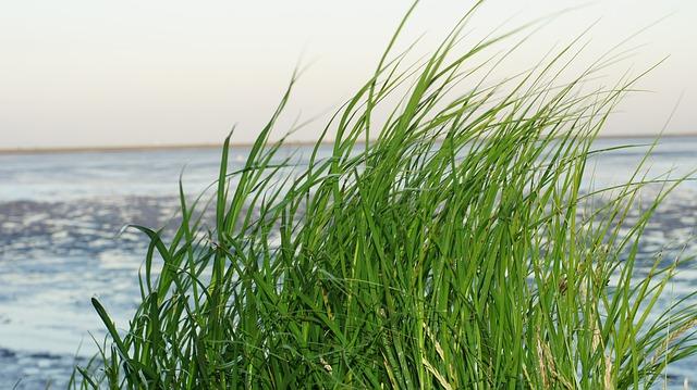 Nordsee Grün