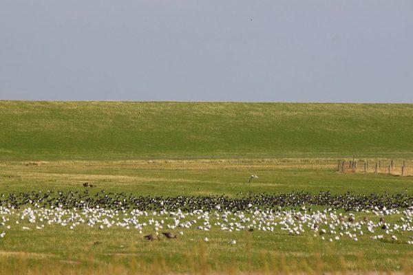Damm Speicherbecken Leyhörn Vögel