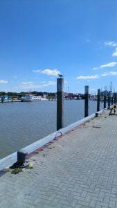 Im Blick der Möwe - der Hafen von Bensersiel