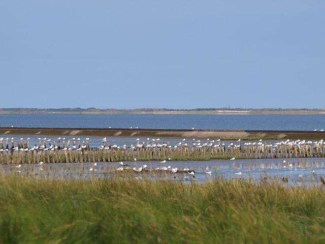 Wattenmeer Ostfriesland
