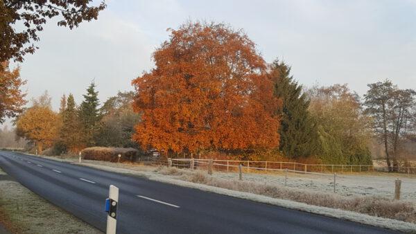 Landstraße, Bäume, Frost