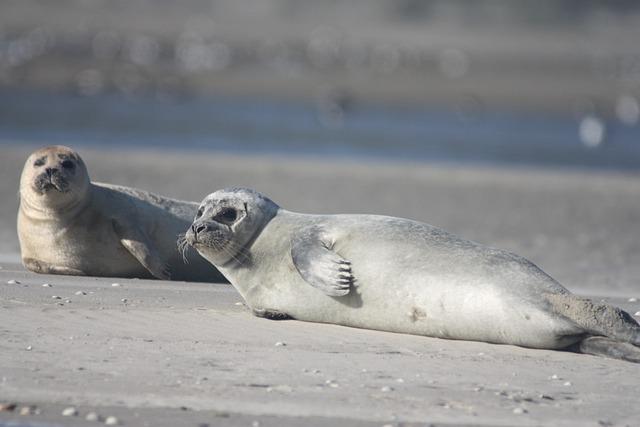 Seehunde Strand